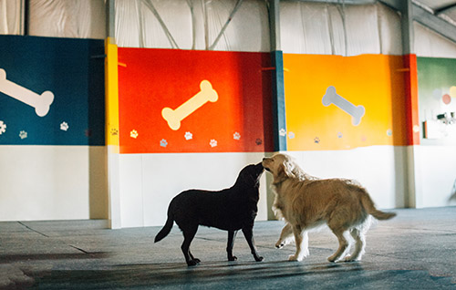 Two dogs playing in the playroom
