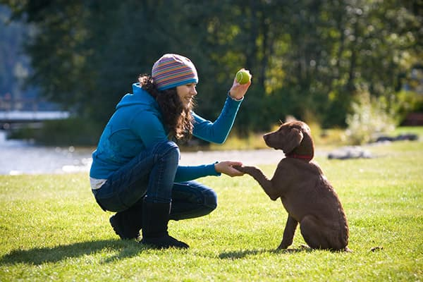 Woman and dog playing fetch