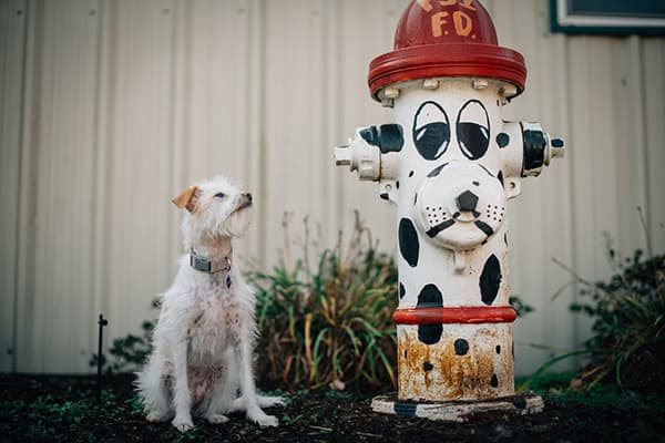Dog looking at a fire hydrant painted like a dog