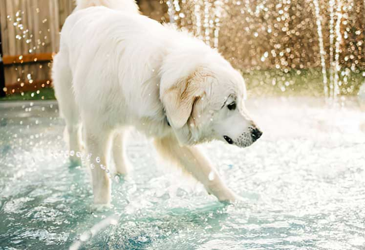 White dog in the fountain