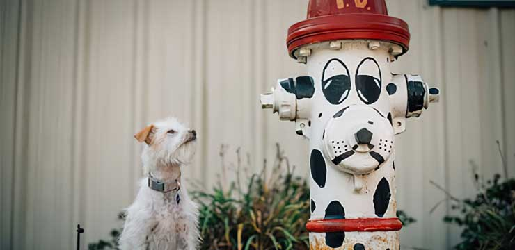 Dog staring at a fire hydrant painted like a dog